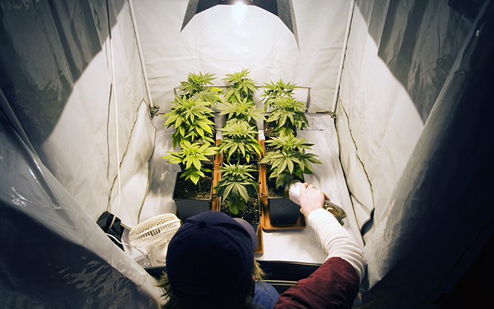 The Benefits of Home Growing Cannabis - Cloudponics Canada